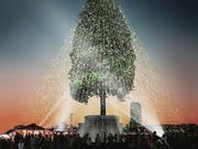 氷見の木が神戸のイベントで使われました